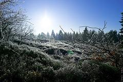 Hermannsweg //  Freezing Rain