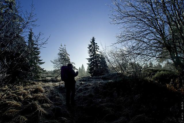 Hermannsweg // In The Shadows