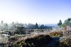 Hermannsweg // Far View 2