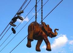 Vue électrisante et peu commune / Electric elephant & shoes