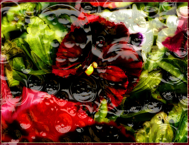 Pansy With Texture