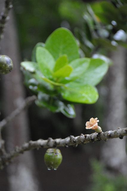 Baum - PiP