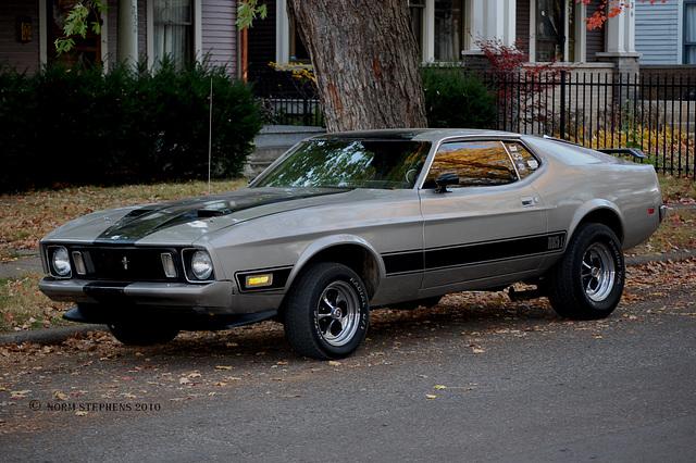 Fall Mustang