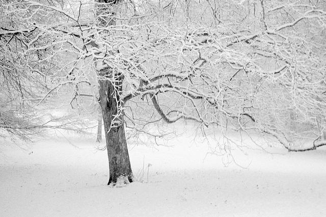 Sola arbo en vintro / Winterwelt