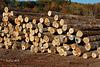 Begley Lumber Company Bar Codes