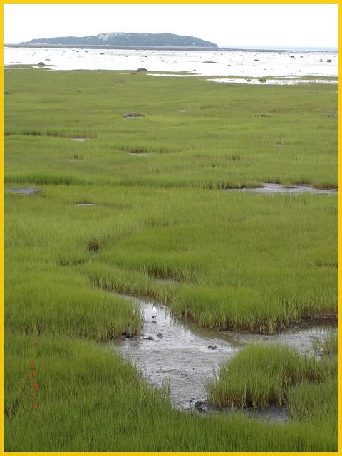 St-Lawrence river low tide eyesight / Fleuve à marée basse