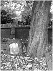 Helsingborg cemetery - Cimetière de Helsingborg-  Suède / Sweden -Jenny / 22 octobre 2008. Noir et blanc.