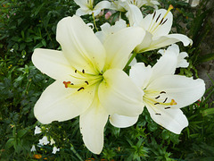 j'irai cueillir la fleur du bien pour que le monde ne soit qu'amour et que nous vivions dans un monde de paix et de partage