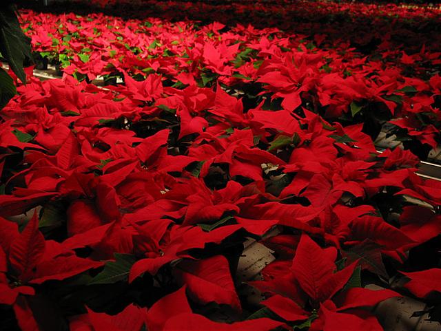wünsche allen ein schönes Adventswochenende