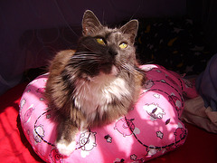 Cleo on her beanbag pillow