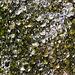 Eis-Stalagmiten (2)