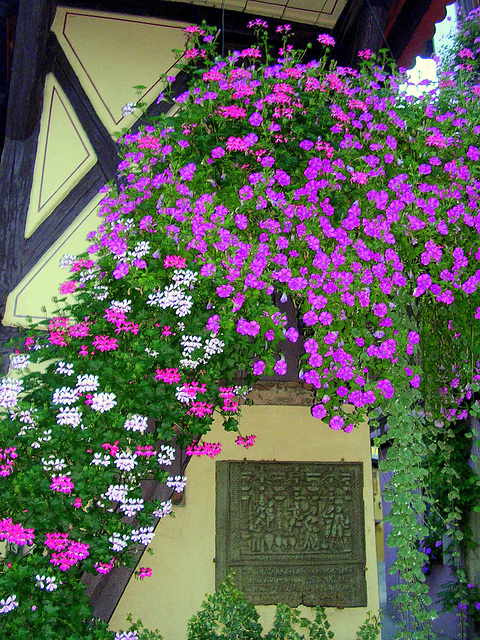 Avalanche de fleurs