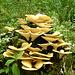 Fungi Tree