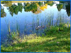 Reflet arborescent mouillé et multicolore /  Dans ma ville / Hometown - 12 octobre 2008.