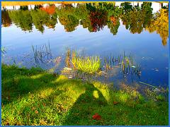 Reflet arborescent mouillé et multicolore / Wet and colourful reflection - Hometown / Dans ma ville - Québec. CANADA.