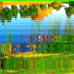 Reflet arborescent mouillé et multicolore. Photofiltré reflets dans l'eau.  Dans ma ville / Hometown. 12 octobre 2008.