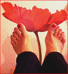 Pieds voluptueux et rouge floral lascif.  Voluptuous feet and lascivious floral.  Cadeau  /  Gift .