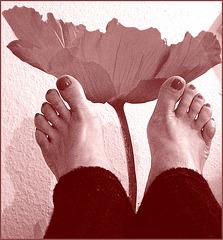 Pieds voluptueux et rouge floral lascif.  Voluptuous feet and lascivious floral -  Cadeau  /  Gift.