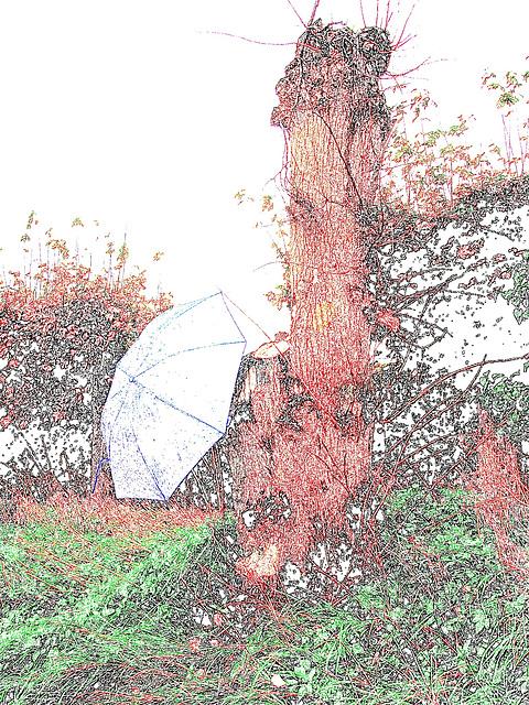 Arbre trapu et ombrelle bleue - Båstad / Suède. 21 octobre 2008.  Contour en couleur