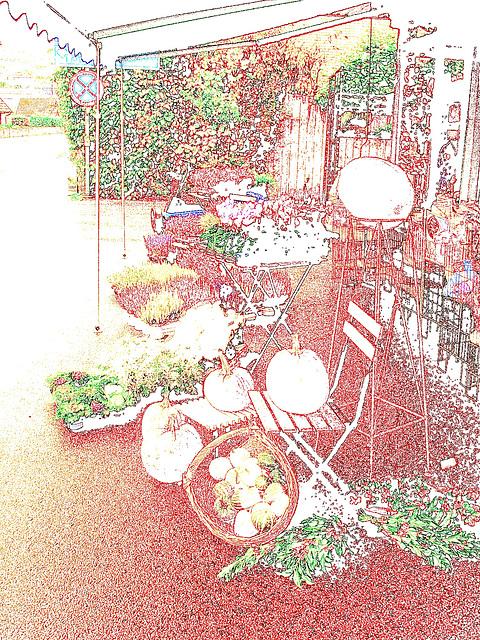 Citrouilles et fleurs / Flowers & pumkins - Båstad , Sweden / Suède. 21 octobre 2008.