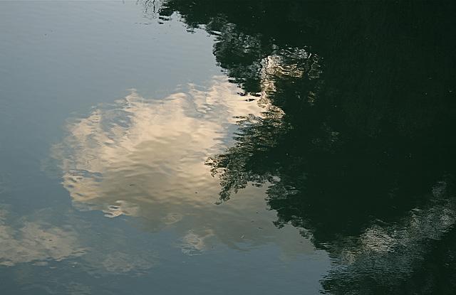 arbre et nuage dans l'eau