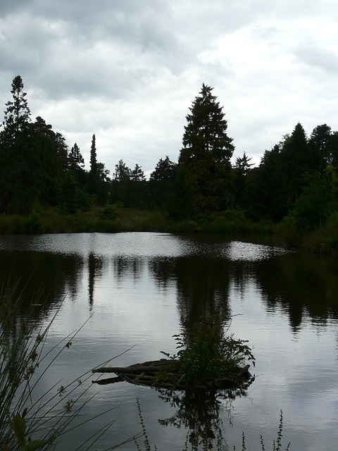 20 Bedgebury Pinetum Pond