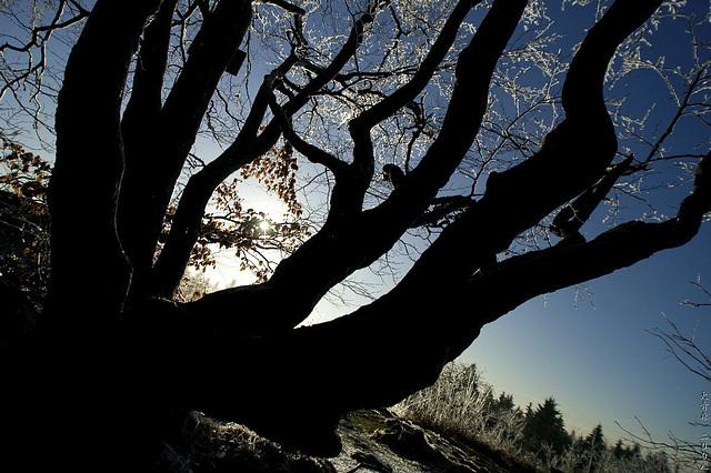 Winter - Teaser 1