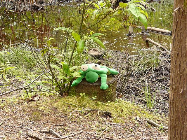 10 Bedgebury Pinetum Creature