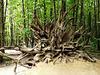4 Bedgebury Pinetum Tree Down