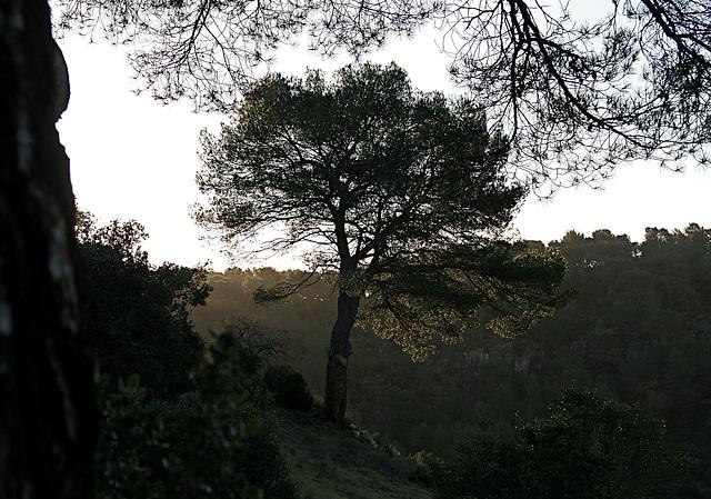 De bon matin , un arbre