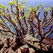 DSCN0697 Pflanzen mit Aussicht