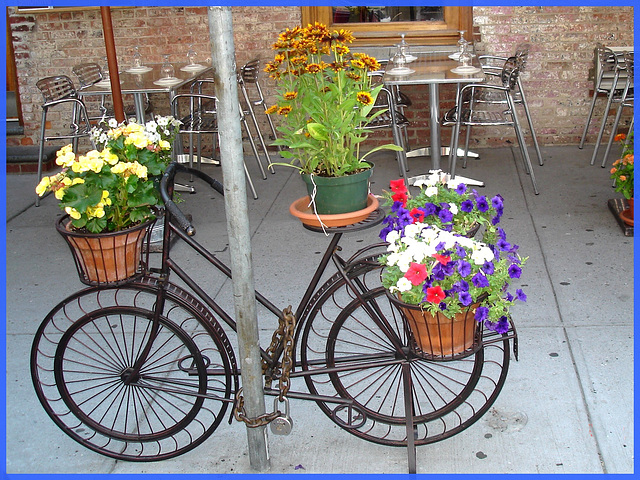 Vélo en fleurs- Flowery bike- Pédales ou pétales !  Pedals or petals ! - NYC. 19 juillet 2008