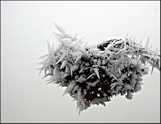 coeur de  glace....frozen heart