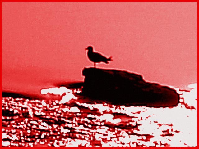 Seagull on the rock / Mouette sur roche - Dans ma ville / Hometown. Hallucinations.