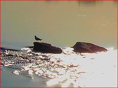 Seagull on the rock / Mouette sur roche - Dans ma ville - Hometown. 4 mai 2008 / Hallucinations.....
