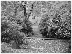 Helsingborg cemetery - Cimetière de Helsingborg-  Sweden / Suède - - In between - Au milieu de la verdure. Photofiltre- Noir & blanc.