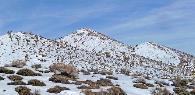 Nevada Snow (3480)