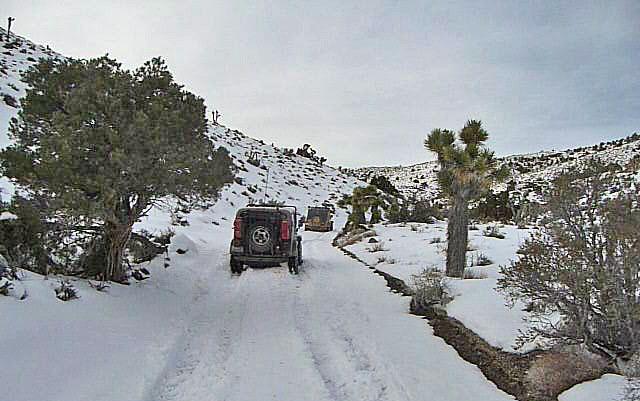 Nevada Snow (3481)