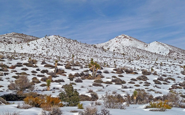 Nevada Snow (3488)