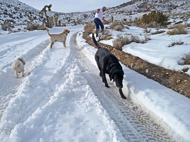 Nevada Snow (3492)