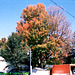 Beekman Street In The Fall, Picture 4, Saratoga, NY, USA, 2008