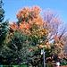 Fall Colors In Saratoga, Saratoga, NY, USA, 2008