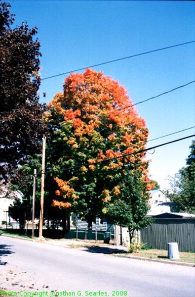 Fall Colors In Saratoga, Picture 2, Saratoga, NY, USA, 2008