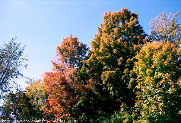 Fall Colors In Saratoga, Picture 3, Saratoga, NY, USA, 2008