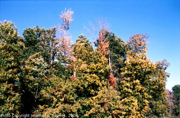 Fall Colors at I90 Rest Stop, Picture 3, NY, USA, 2008