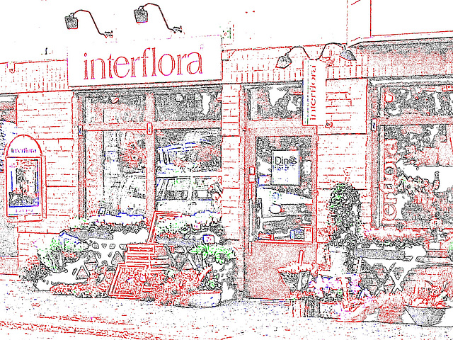 Boutique de fleurs Interflora / Interflora store  -  Helsingborg / Suède - Sweden.  22 octobre 2008-  Contours de couleurs ravivées