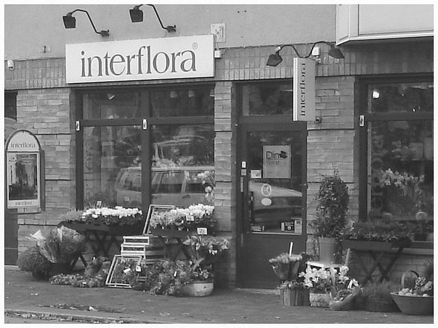 Boutique de fleurs Interflora / Interflora store  -  Helsingborg / Suède - Sweden.  22 octobre 2008-  Noir et blanc