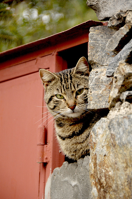 Milia - unsere Katze