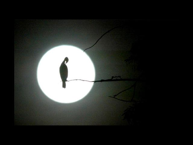 Nights in White Satin, chanté par The Moody blues