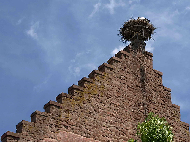 P6036283ac Stork Nest with a Double Staircase